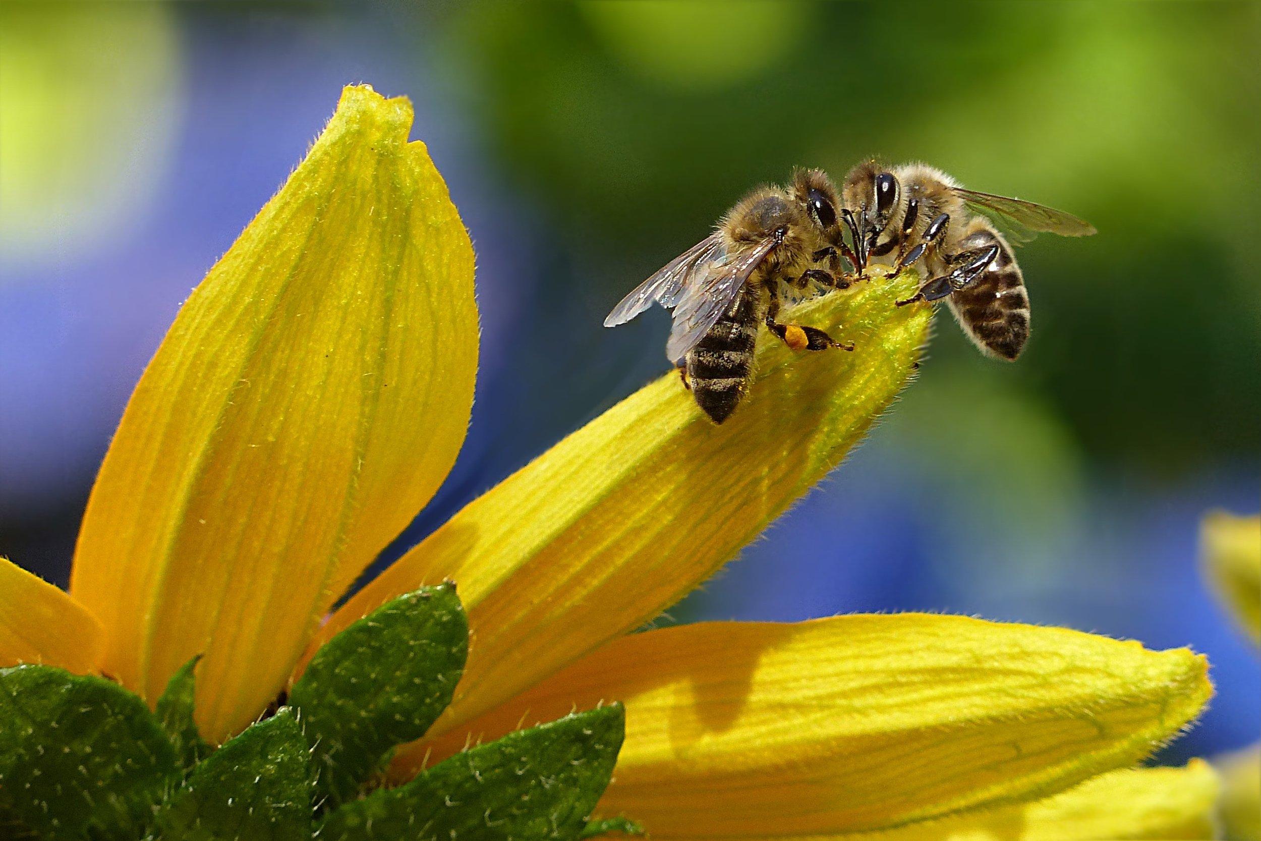 bees-bloom-blur-144252.jpg