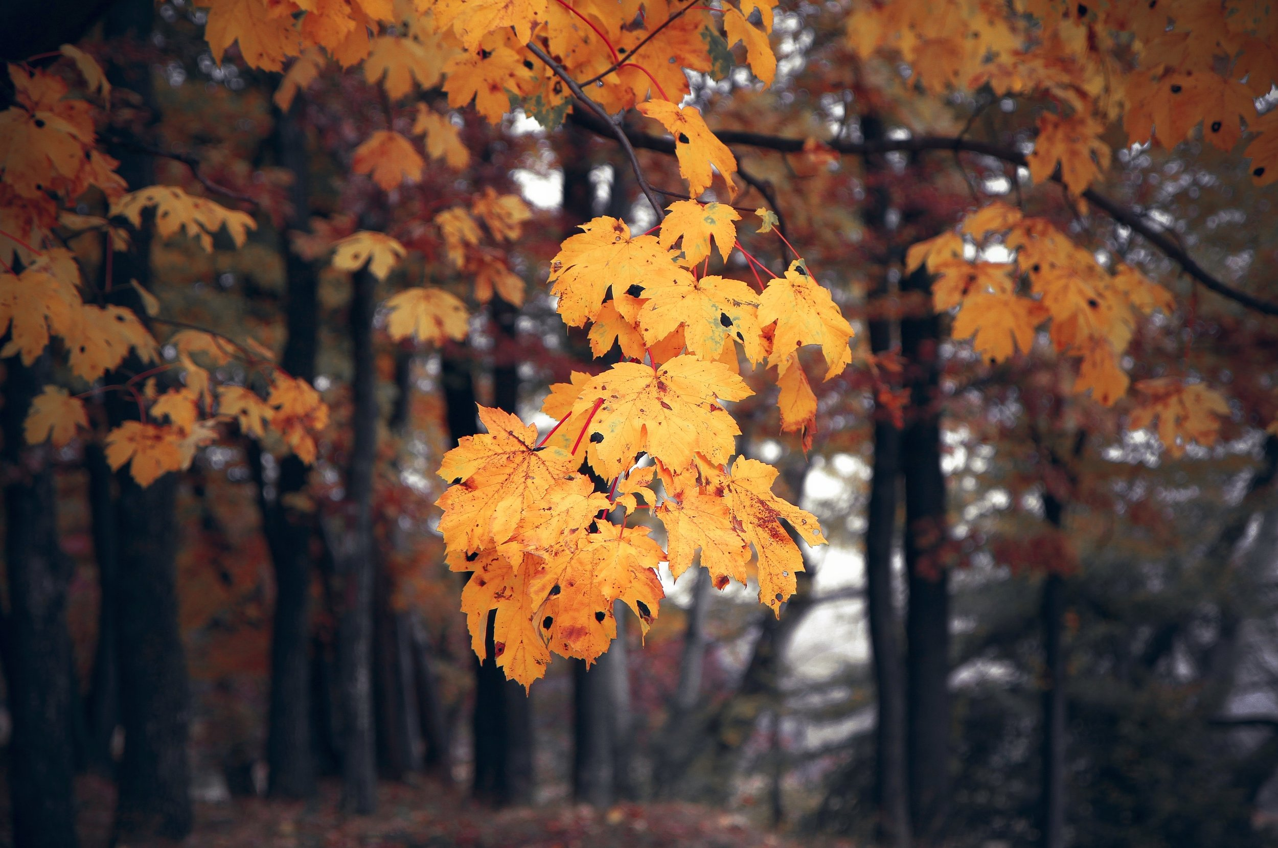 autumn-autumn-colours-autumn-leaves-589842.jpg
