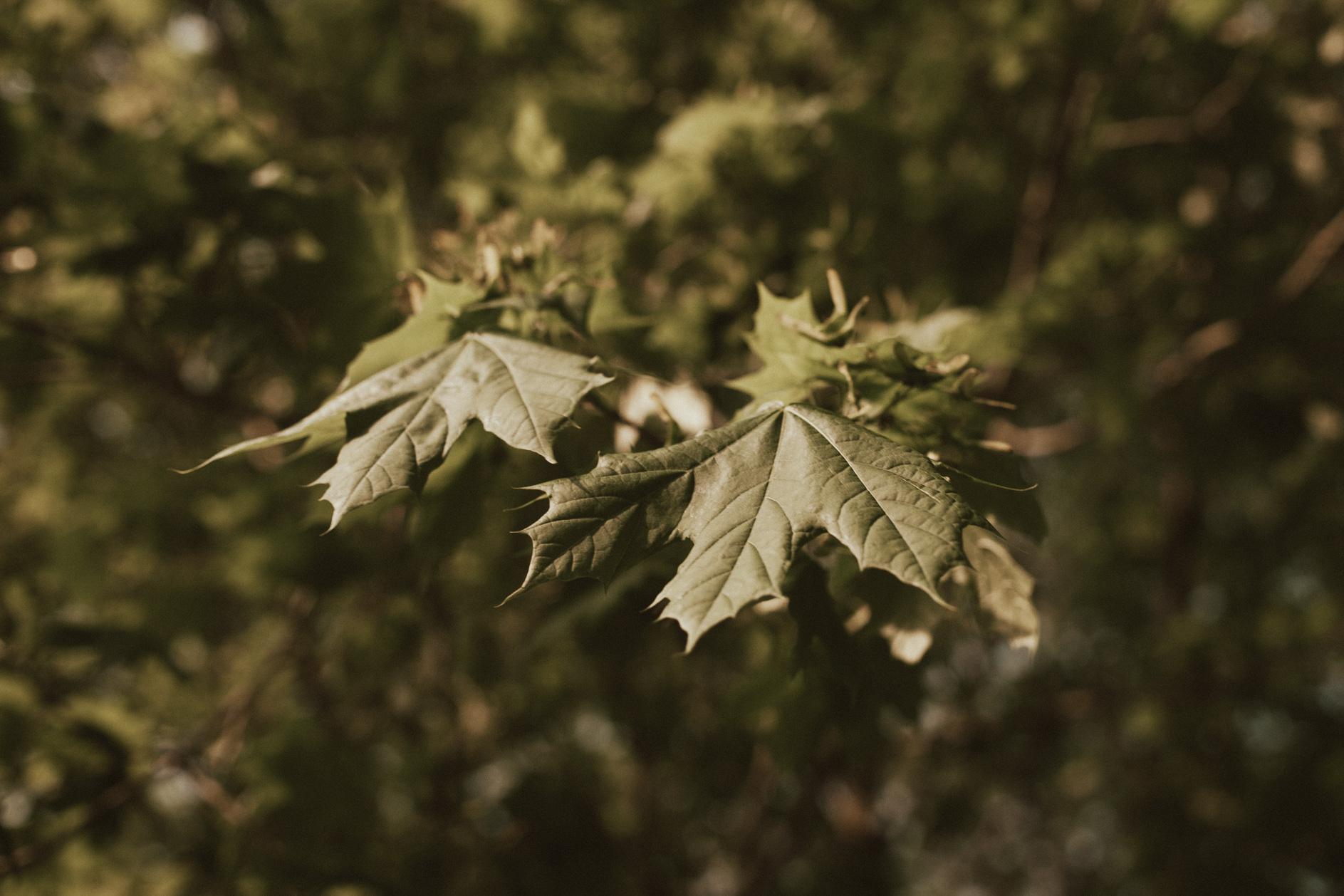 Sarah Antaya Photography-2.JPG