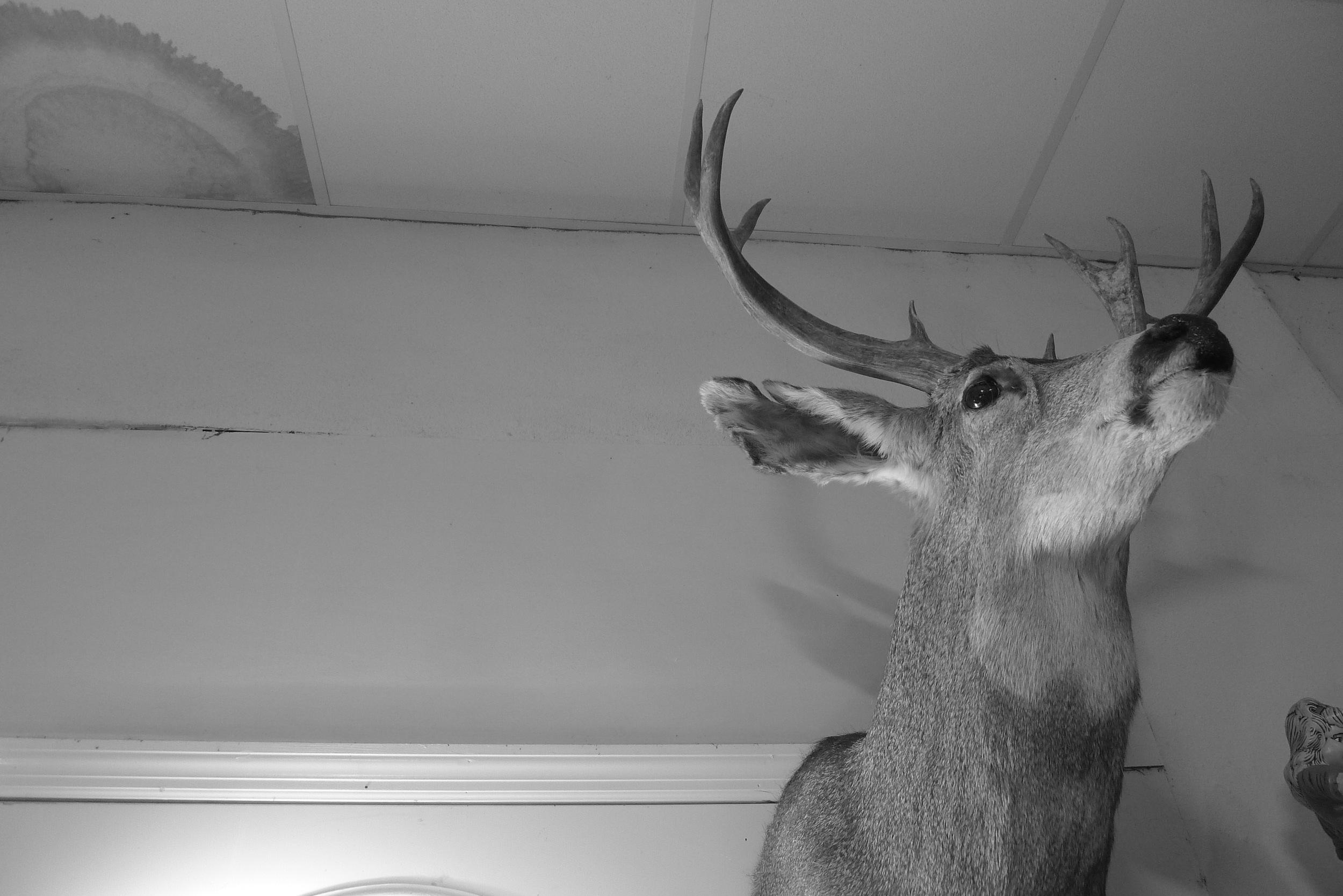 Buck Head, Johnston, SC 2015