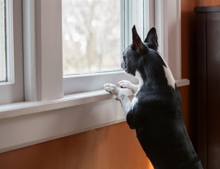 Pet-Friendly Interiors (4).jpg