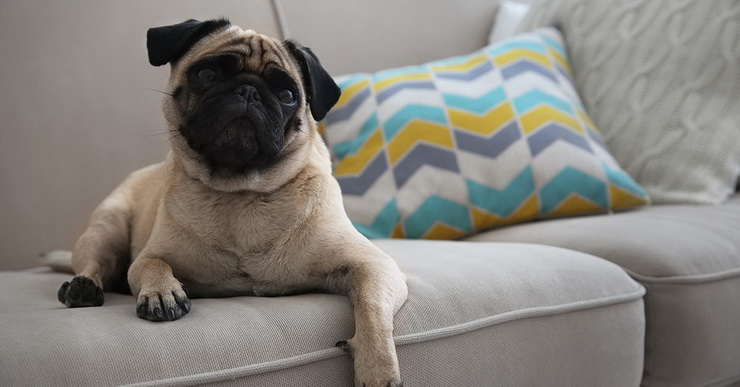 Love Pets Your Home How To Get, Best Furniture For Pets