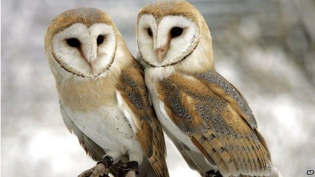 pair of owls.jpg