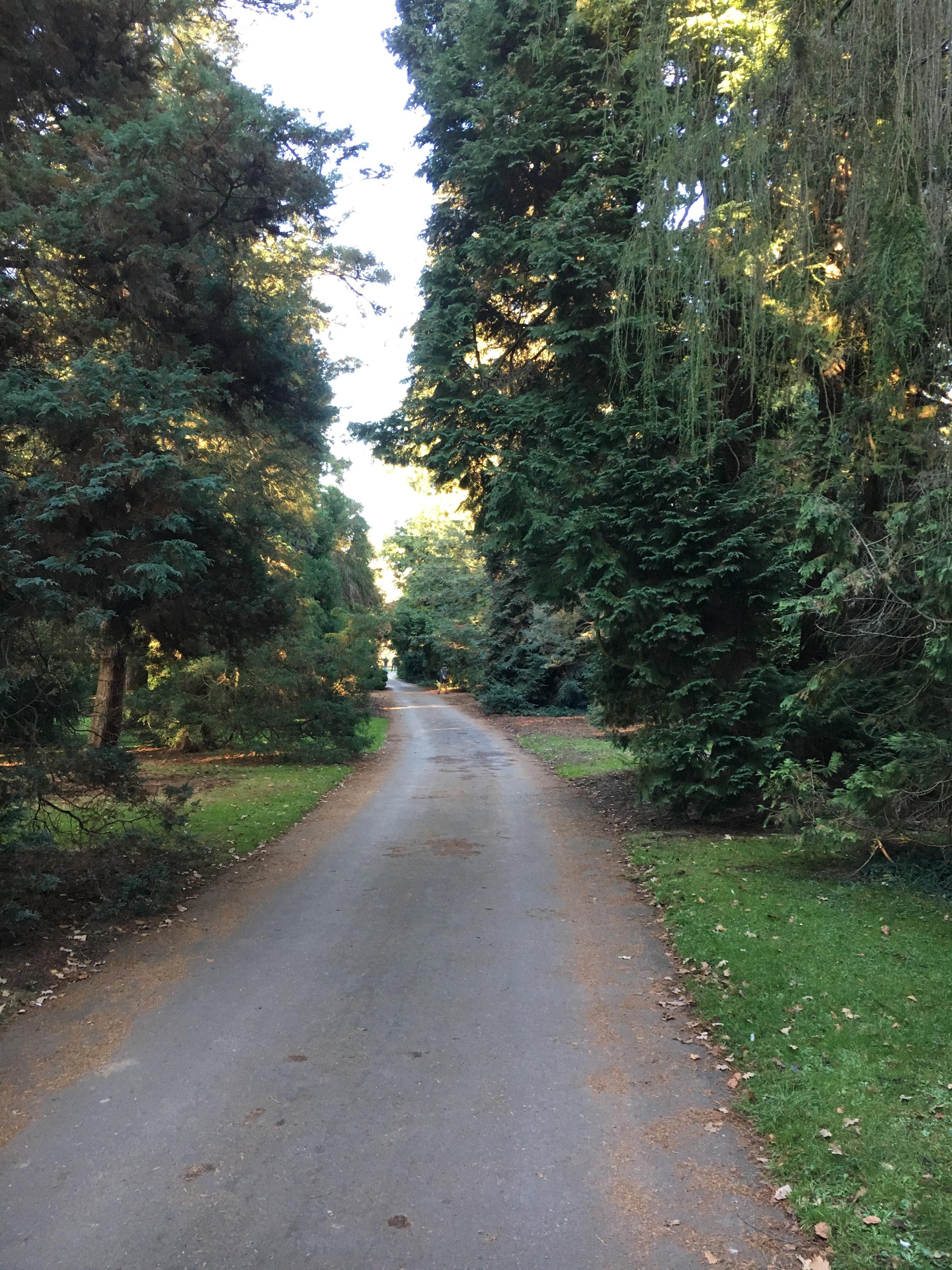 Step_10_Kew_Gardens.jpg