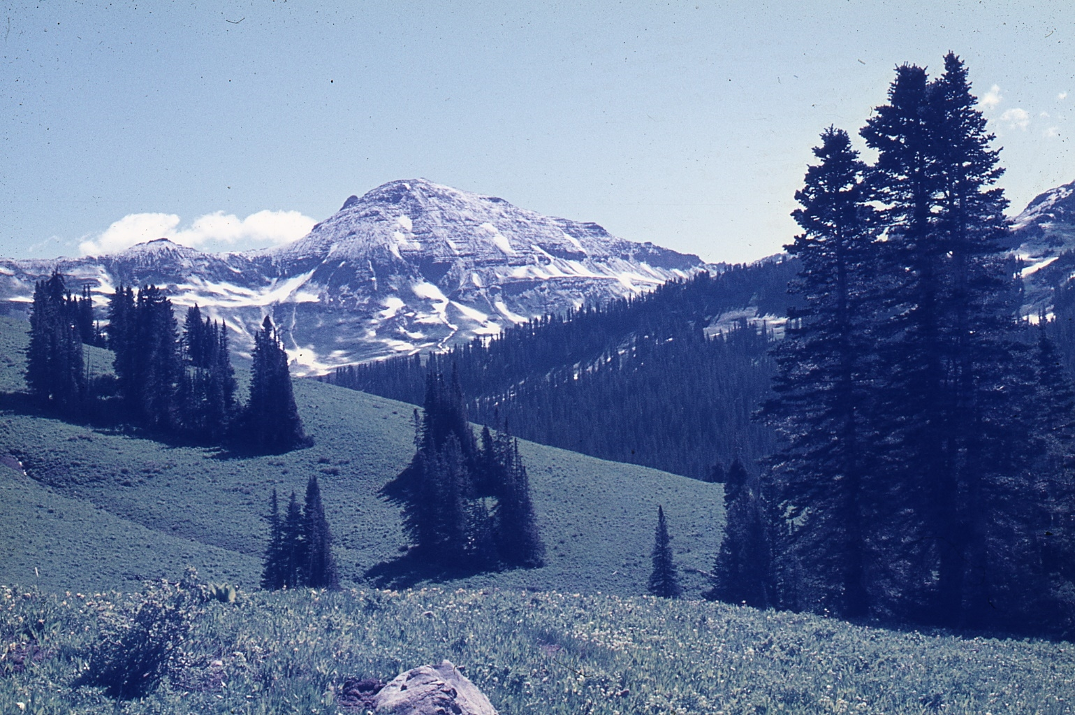 Colorado Rocky Mts, where Graham studied bumblebees for his PhD research