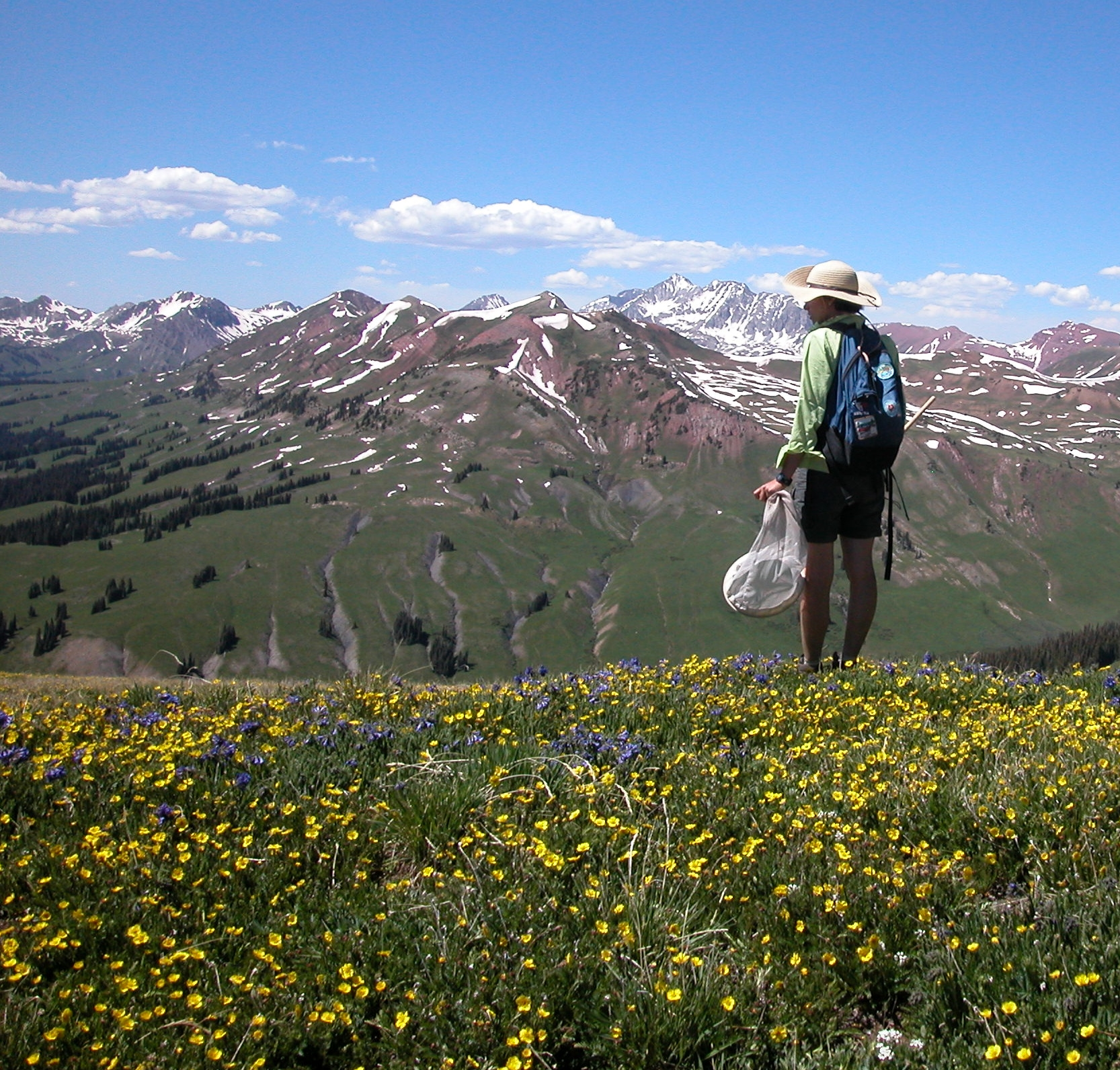 Assisting with bumblebee/ flower research in Colorado