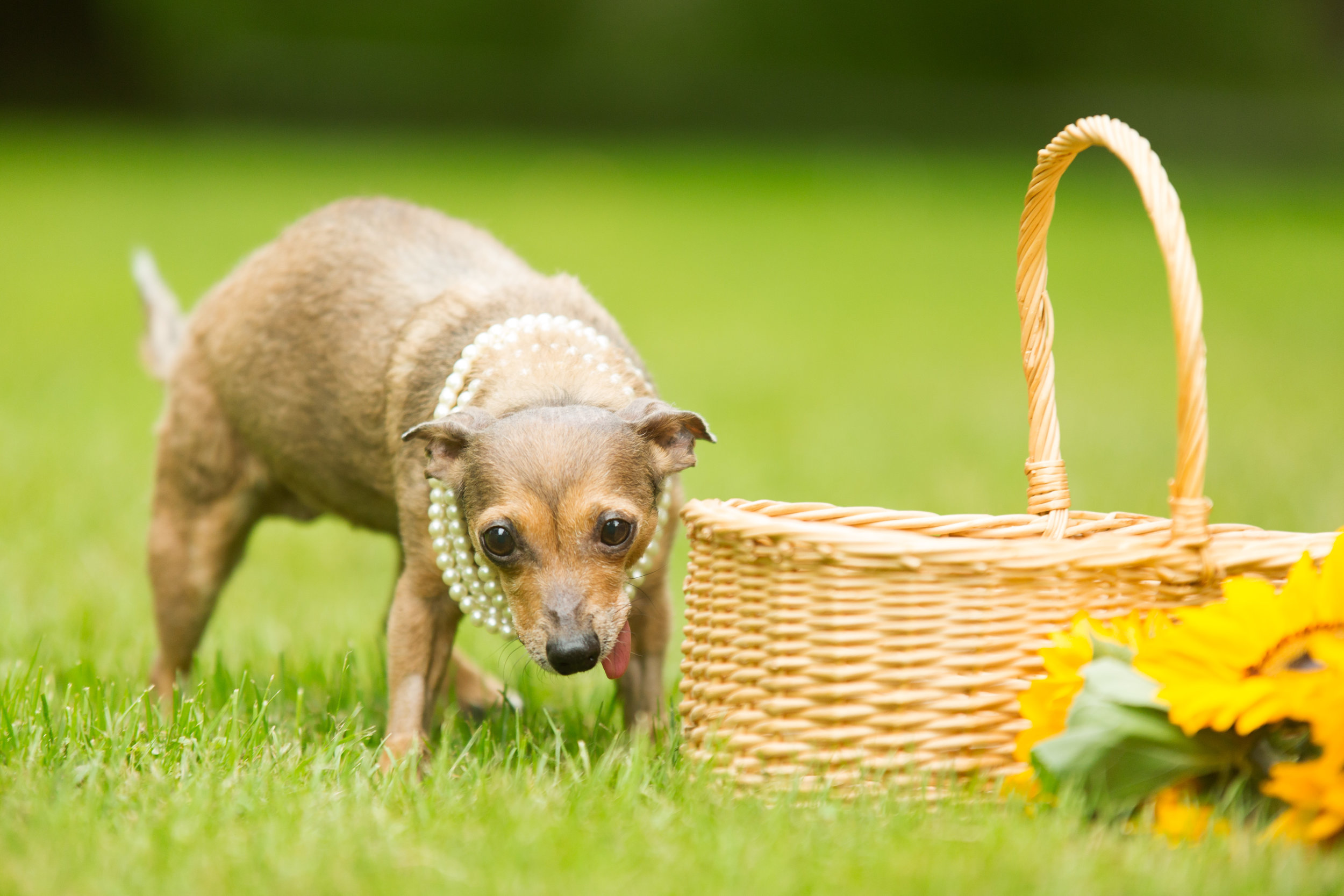 Lucky Dogs Mini Sessions-19.jpg