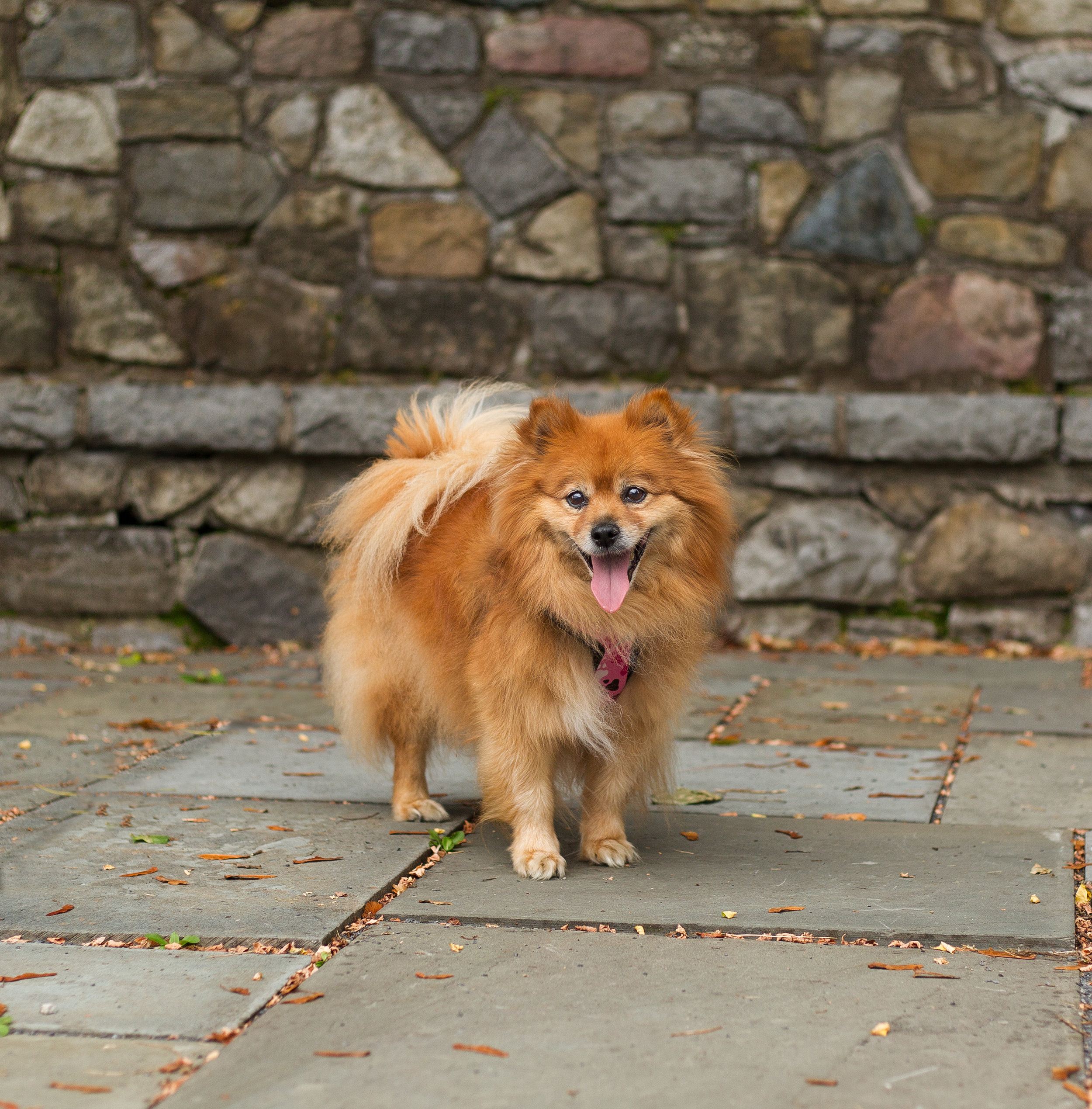 Lucky Dogs Mini Sessions-3.jpg