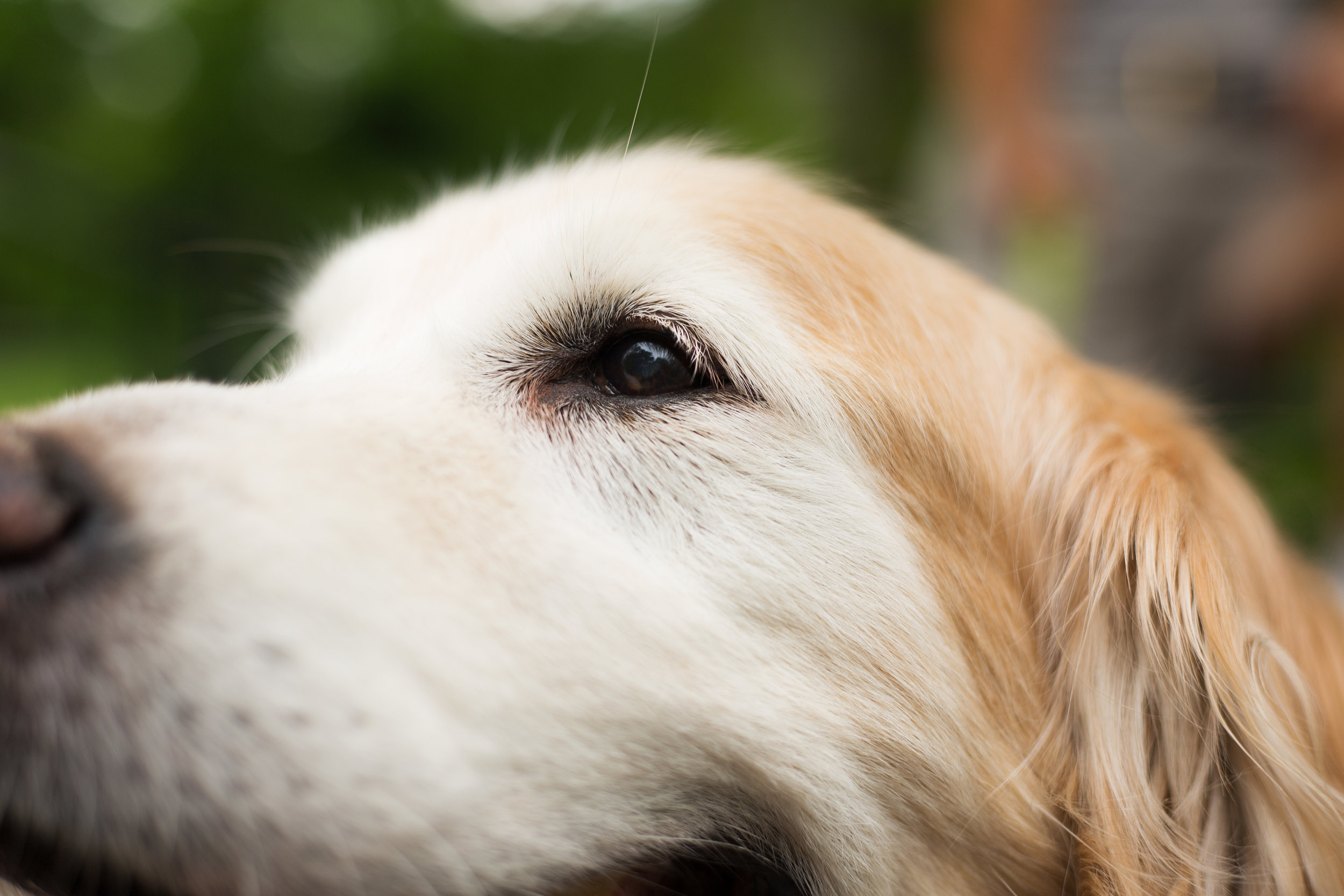 Lucky Dogs Mini Sessions-5.jpg