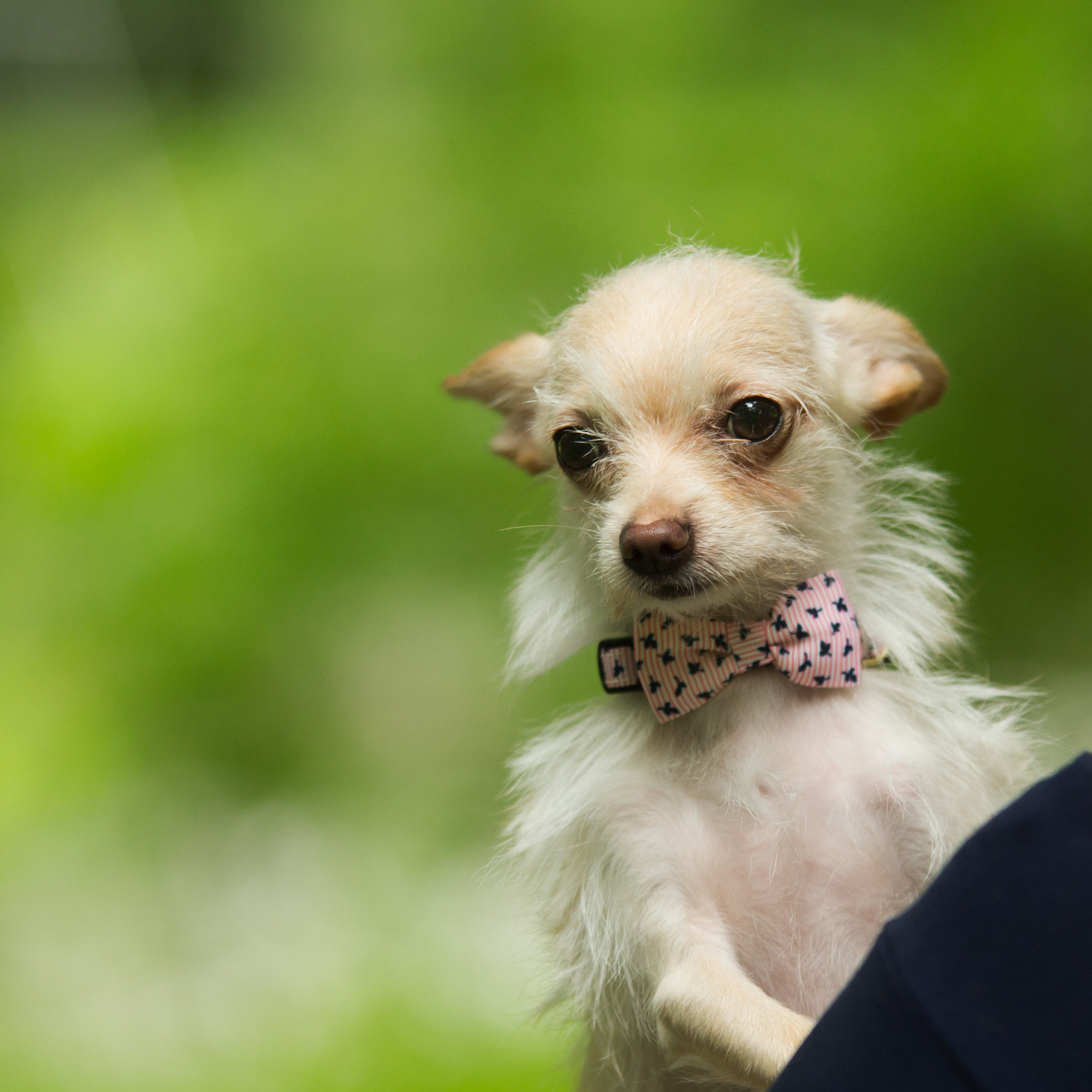 Lucky Dogs Mini Sessions-15.jpg
