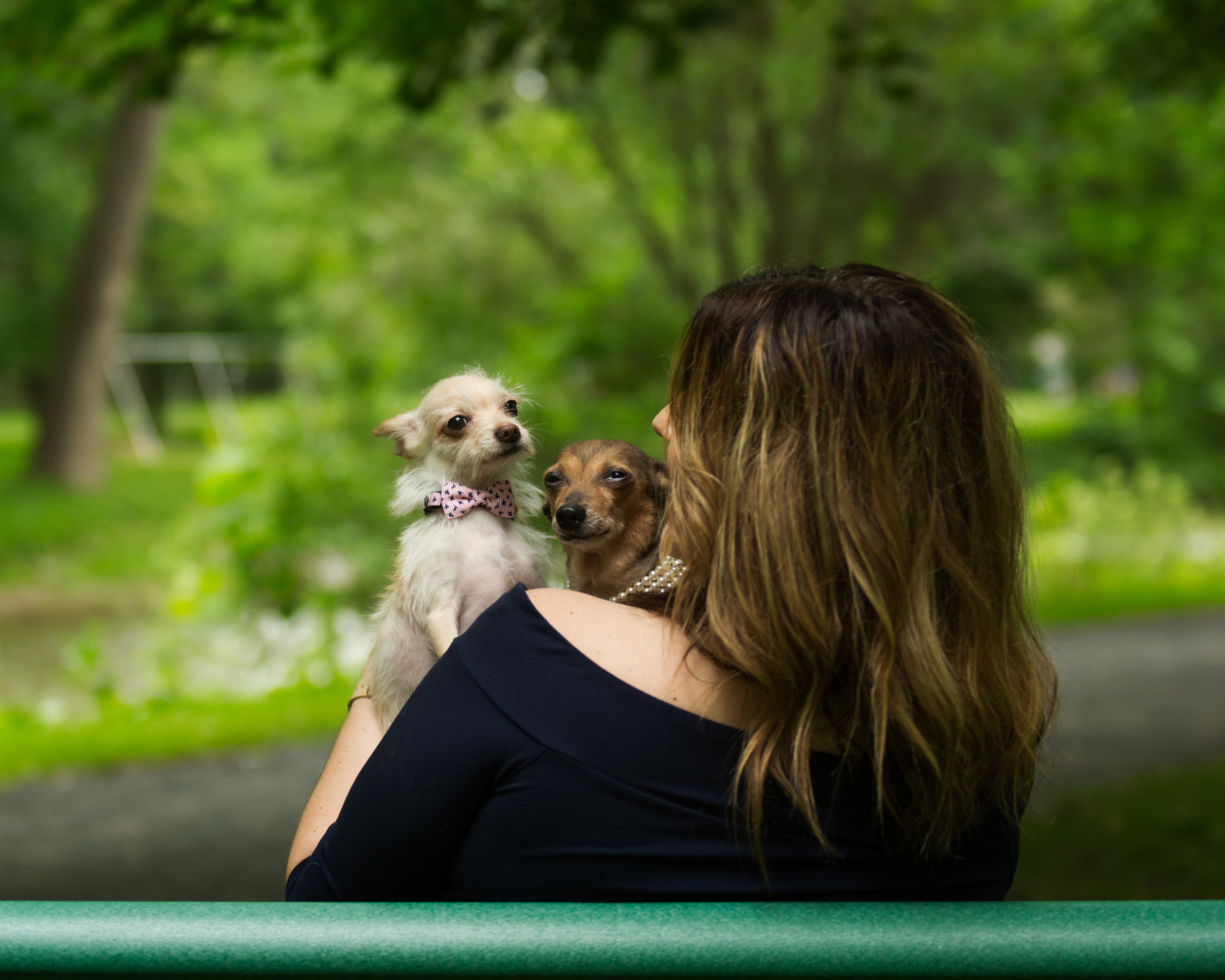 Lucky Dogs Mini Sessions-16.jpg
