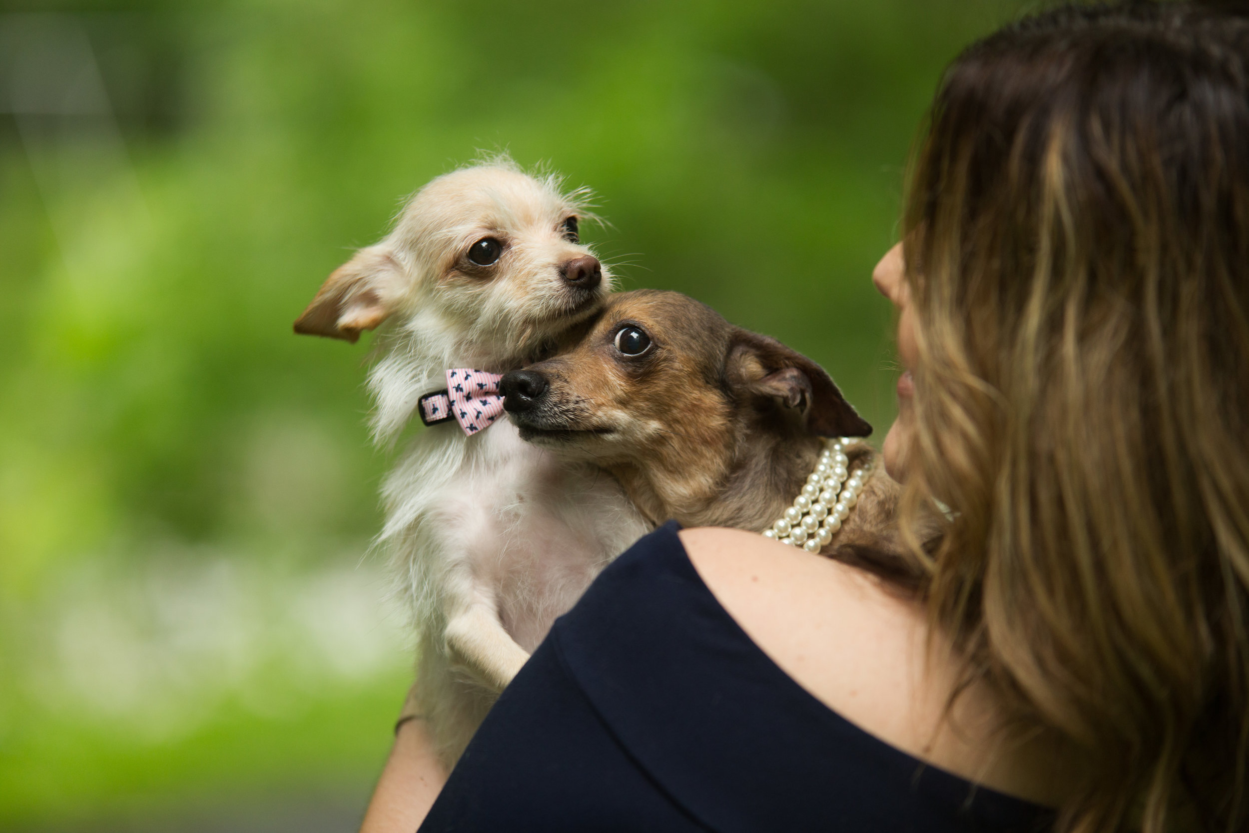 Lucky Dogs Mini Sessions-17.jpg