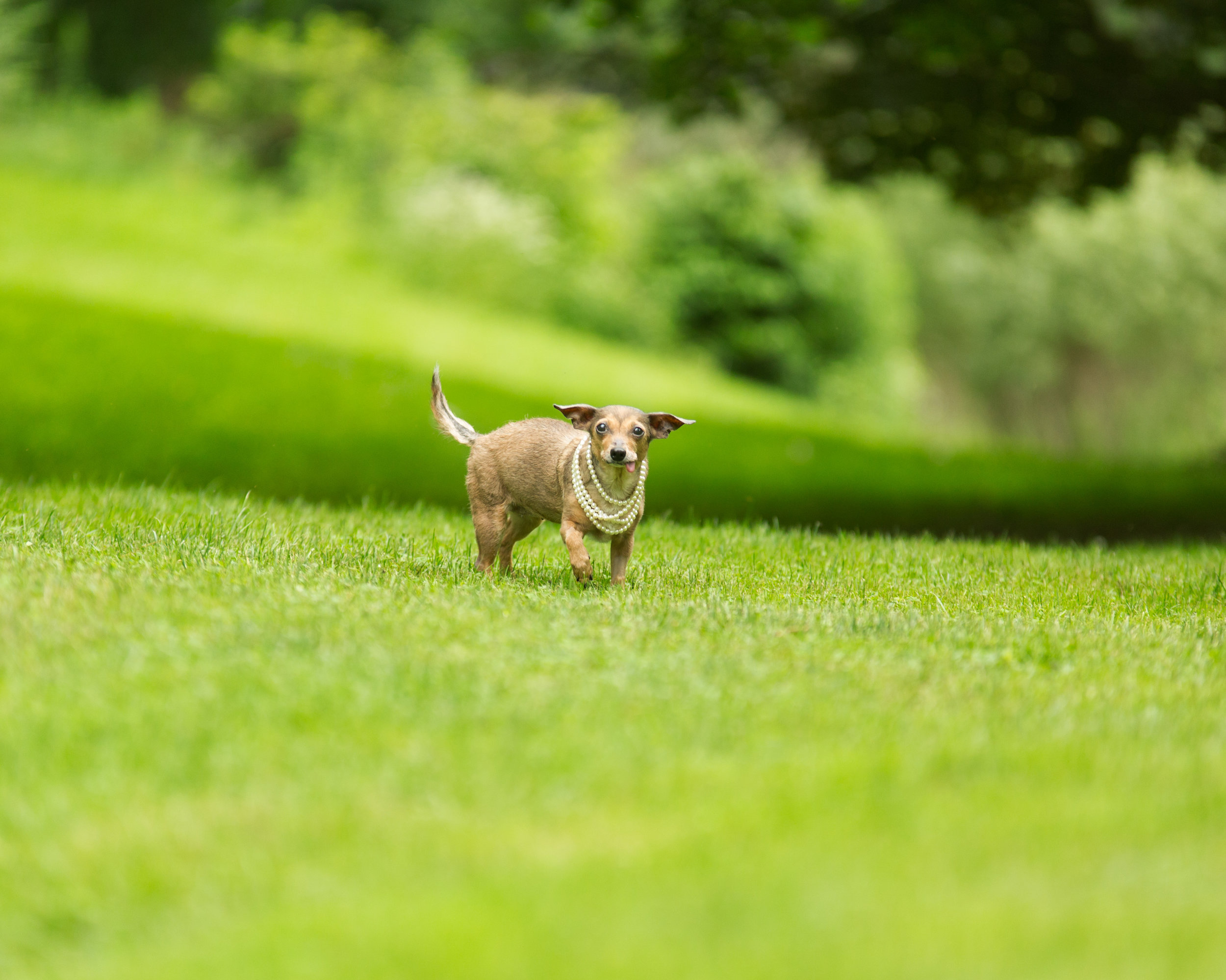 Lucky Dogs Mini Sessions-18.jpg
