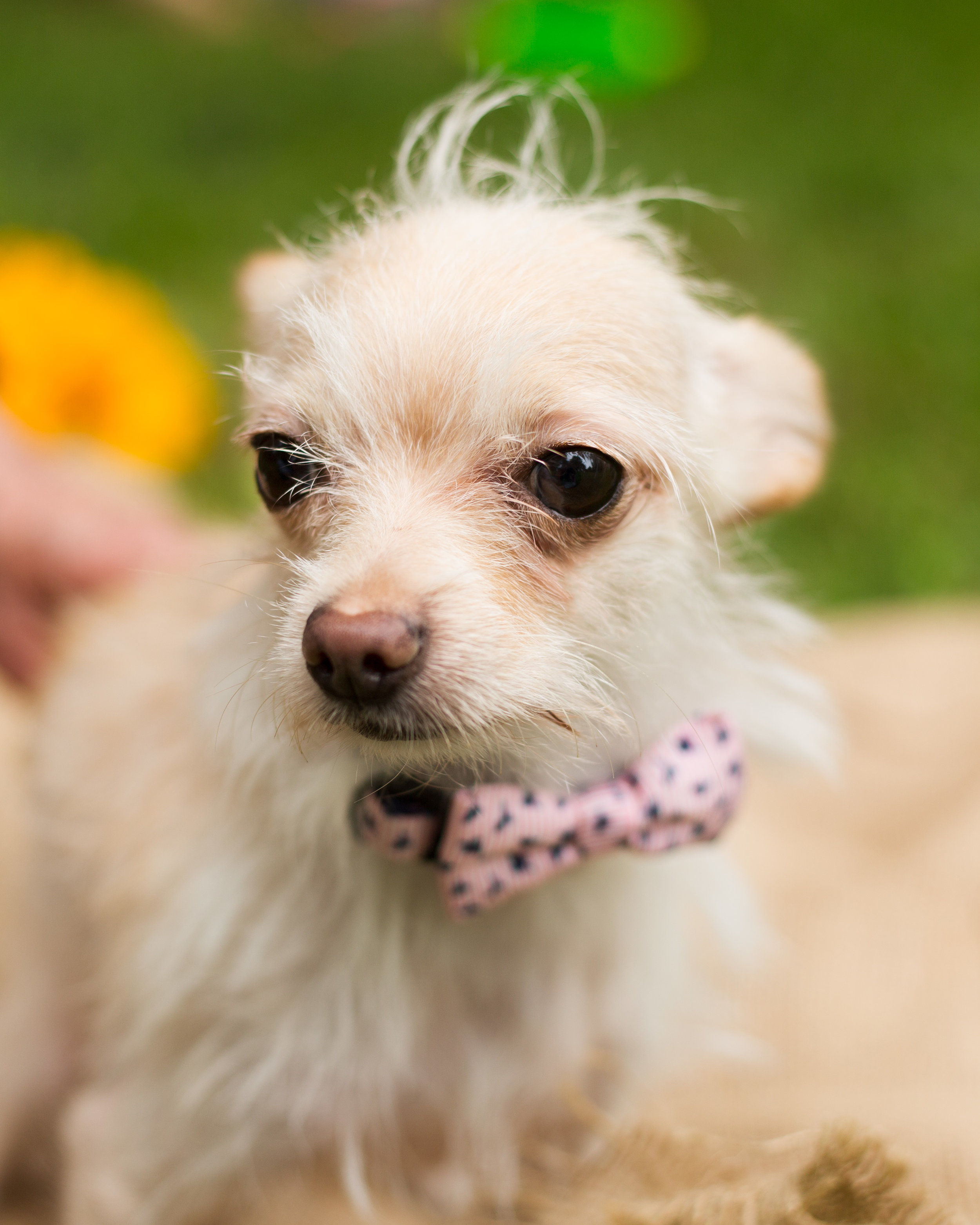 Lucky Dogs Mini Sessions-20.jpg