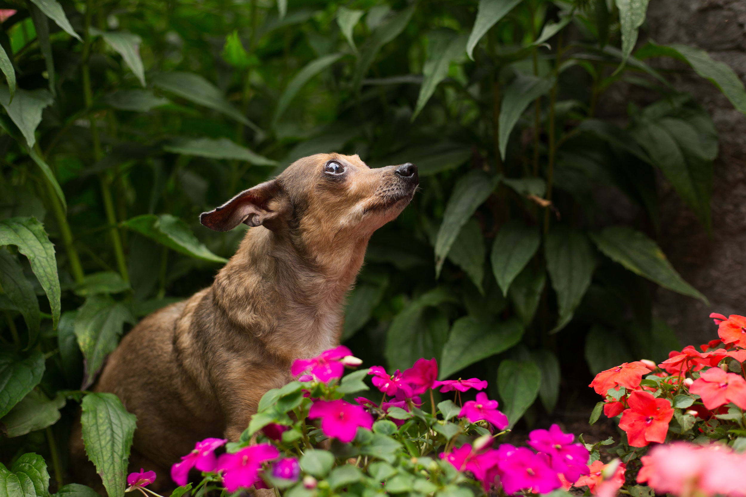 Lucky Dogs Mini Sessions-21.jpg