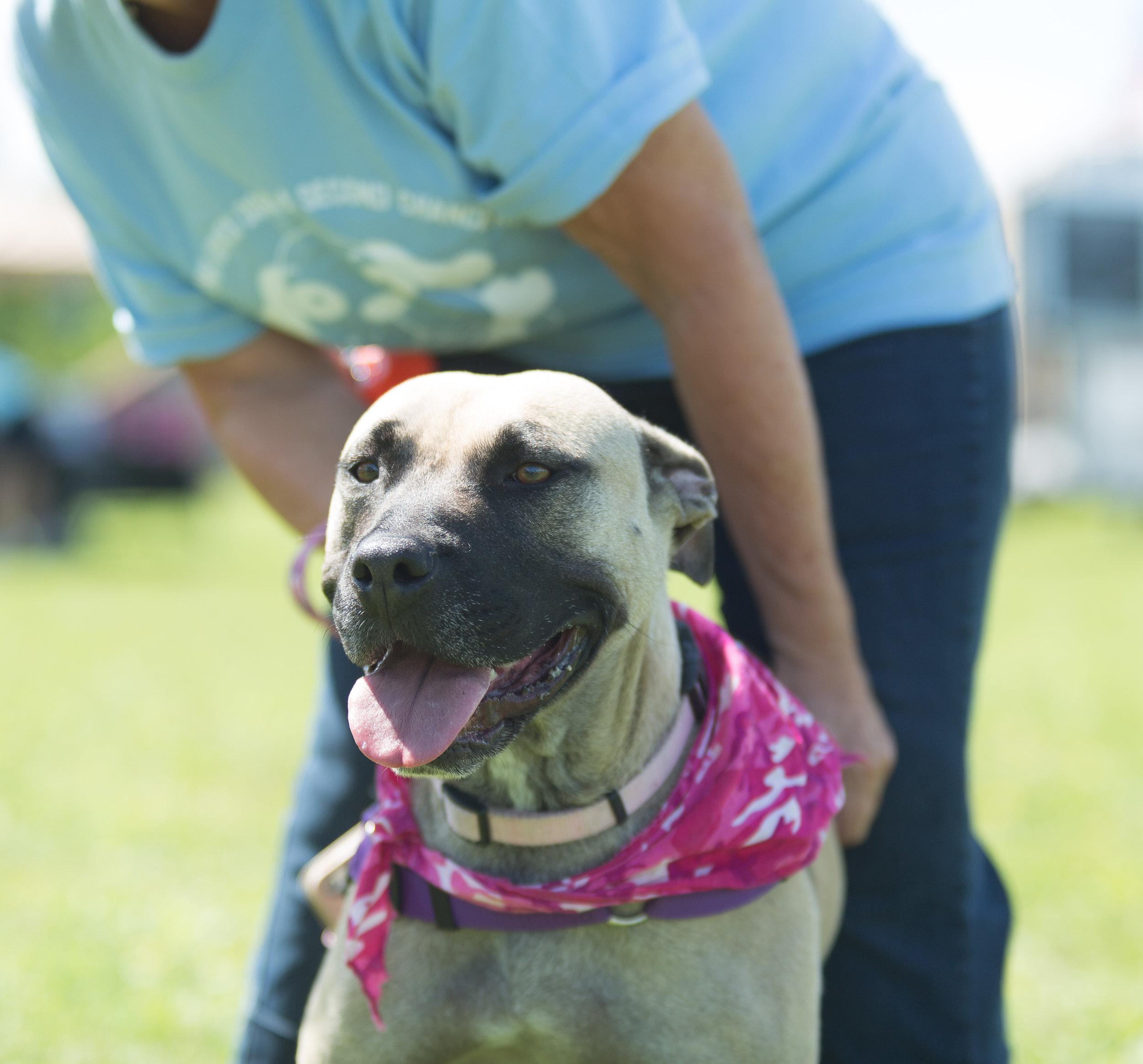 Calamity from  Hubbard's Hounds Dog Rescue