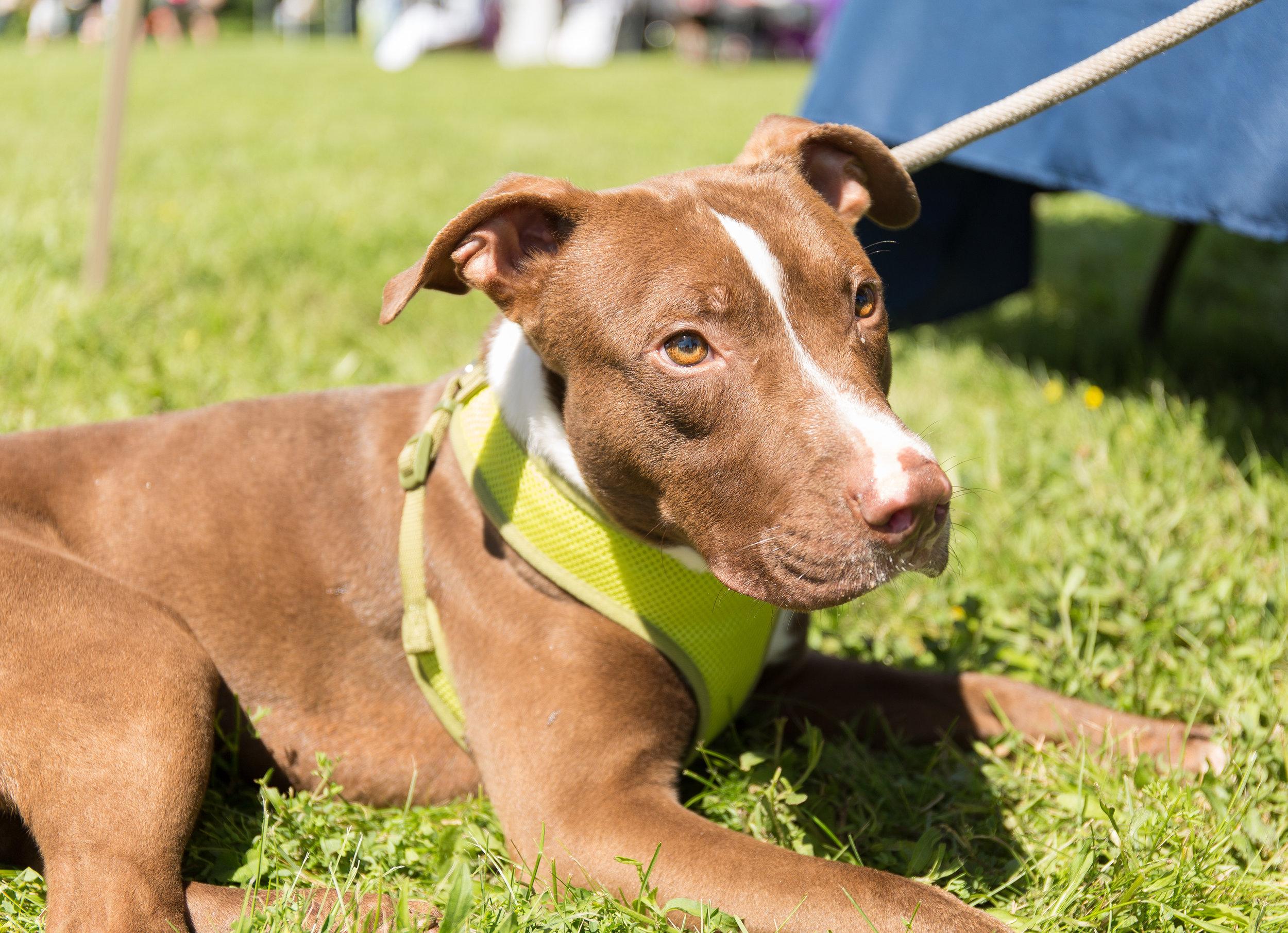 Jackson from  Dewitt Animal Hospital