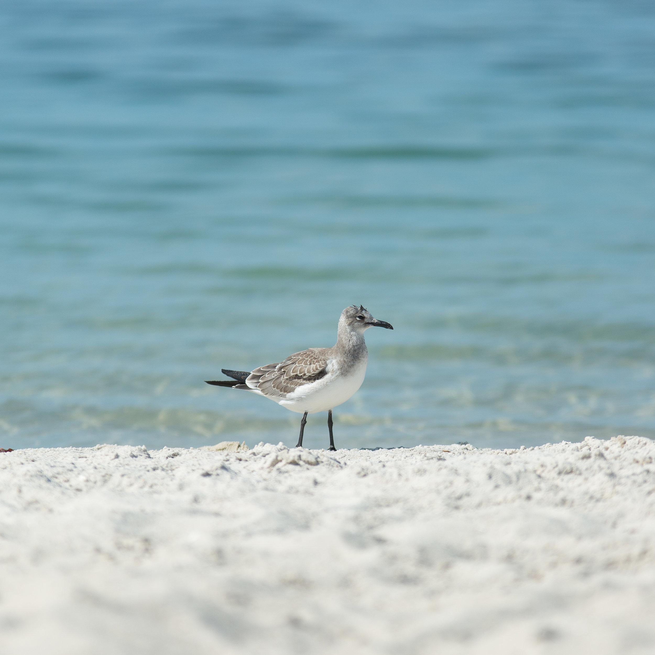 Florida Beach Personal Project-30.jpg