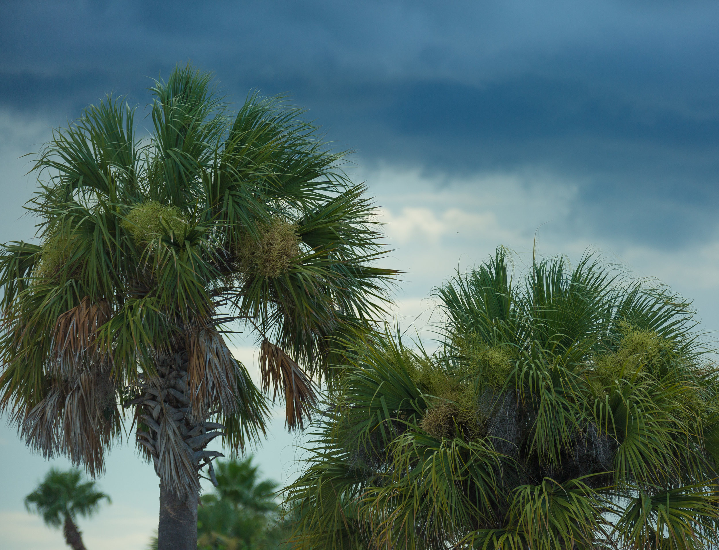 Florida Beach Personal Project-31.jpg