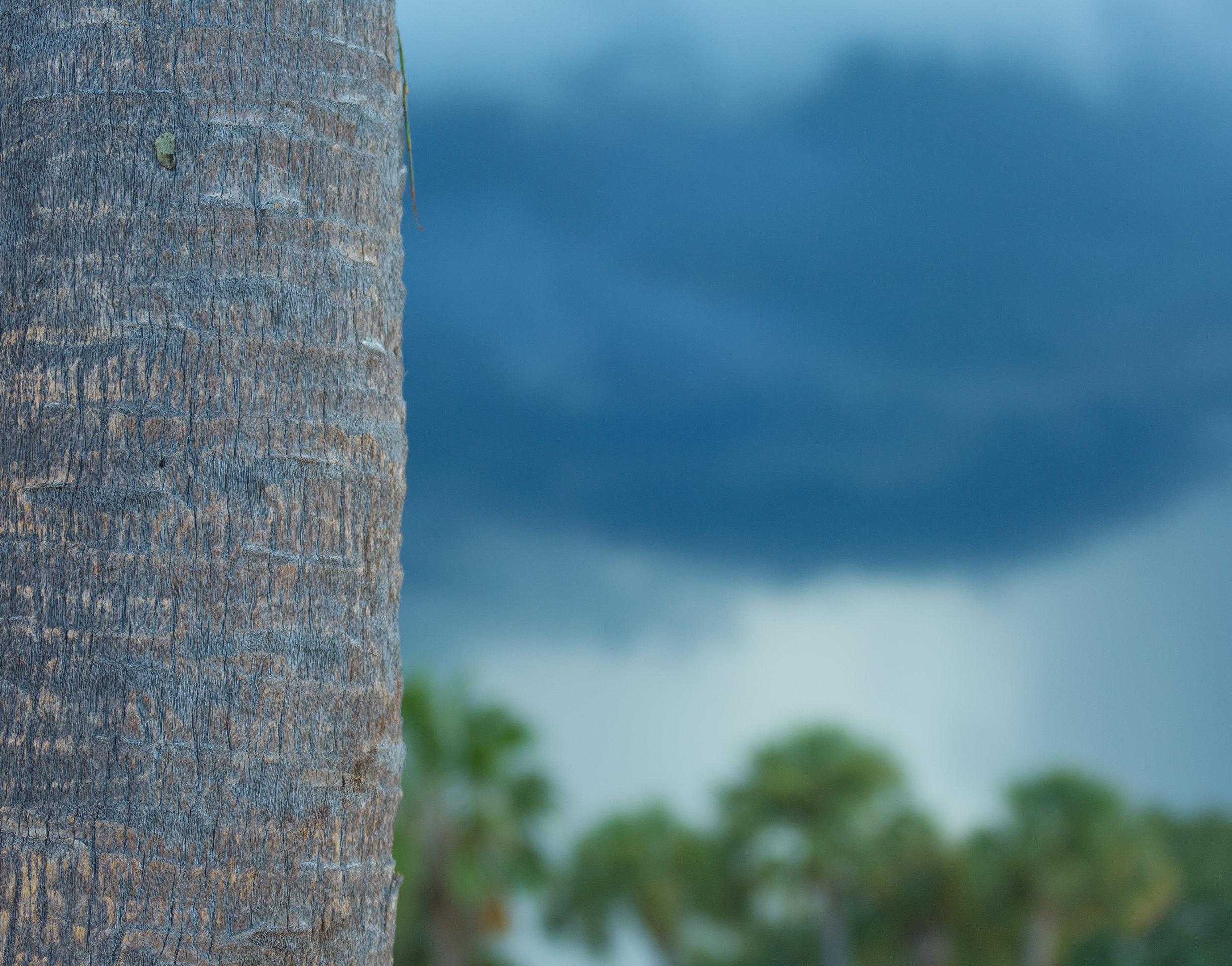 Florida Beach Personal Project-32.jpg