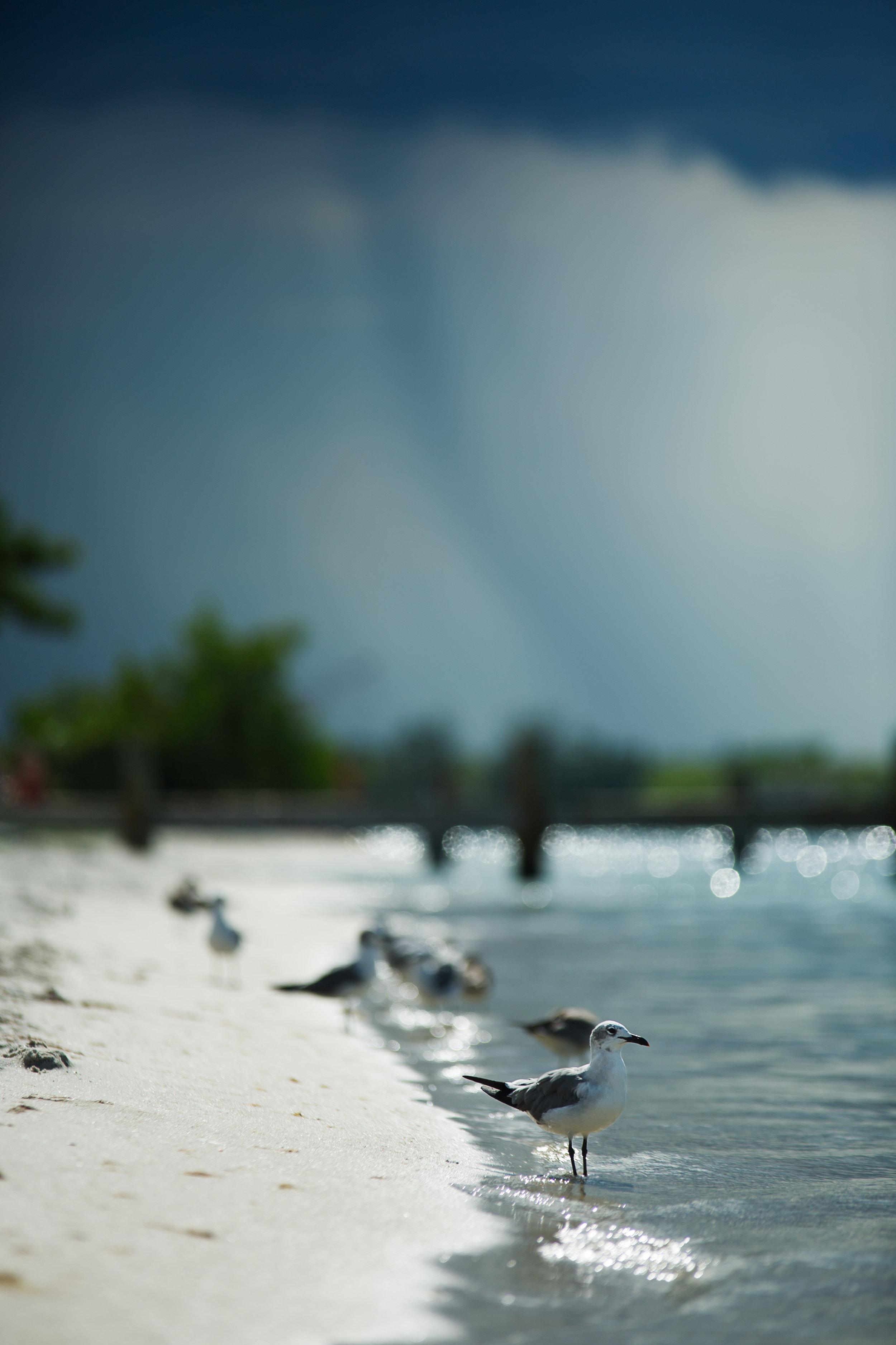 Florida Beach Personal Project-33.jpg