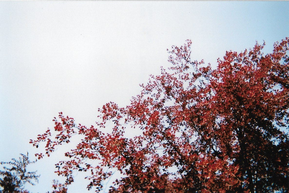 Autumn Colours in Spring.jpg