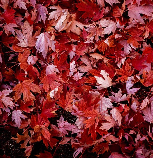 As fall fades away I look forward to the falling snowflakes of the coming winter.