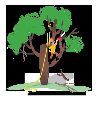 arborist removing deadwood from a tree, Heritage Tree Care Inc.