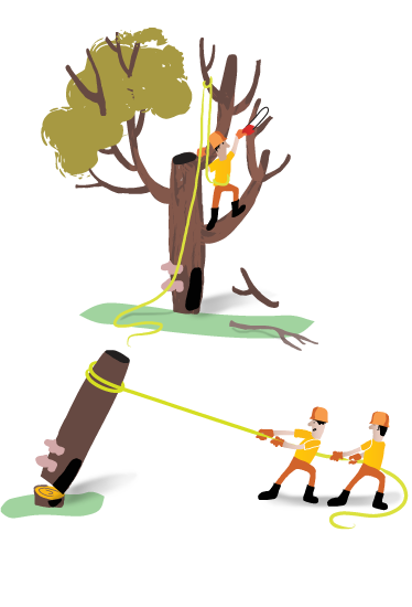 Tree removal in Toronto by professional arborists