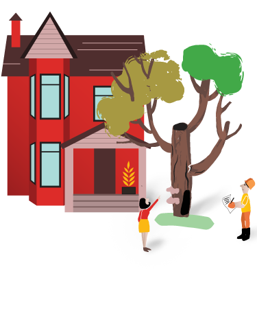 Tree risk assesment by a professional arborist