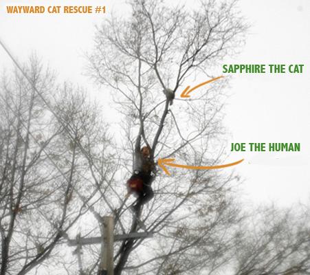 Toronto Wayward Cat Rescue