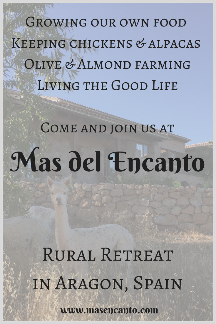 Waking up to the gentle humming of alpacas? Come and stay at Mas del Encanto, our tiny farm & rural retreat in Aragon, Spain!
