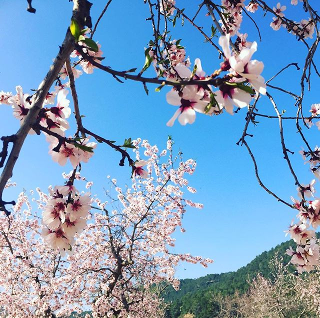 The best things about February in Spain? Sunny winter days and almond blossom. #winterinspain #casarural #matarranya #farmstay #almondblossom #almonds #almondblossomappreciationsociety