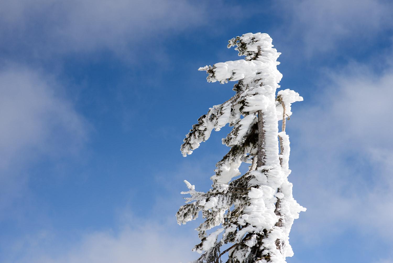 Frozen-020.jpg