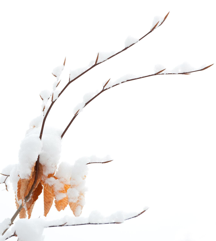 Frozen-024.jpg