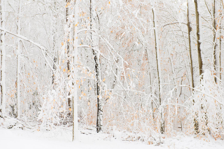 Frozen-025.jpg