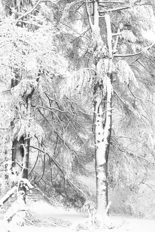 Frozen-027.jpg