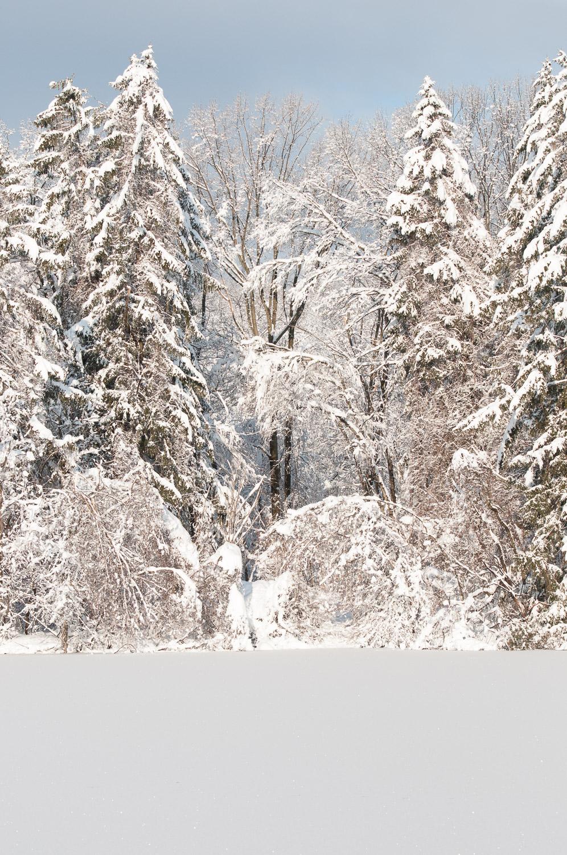 Frozen-028.jpg
