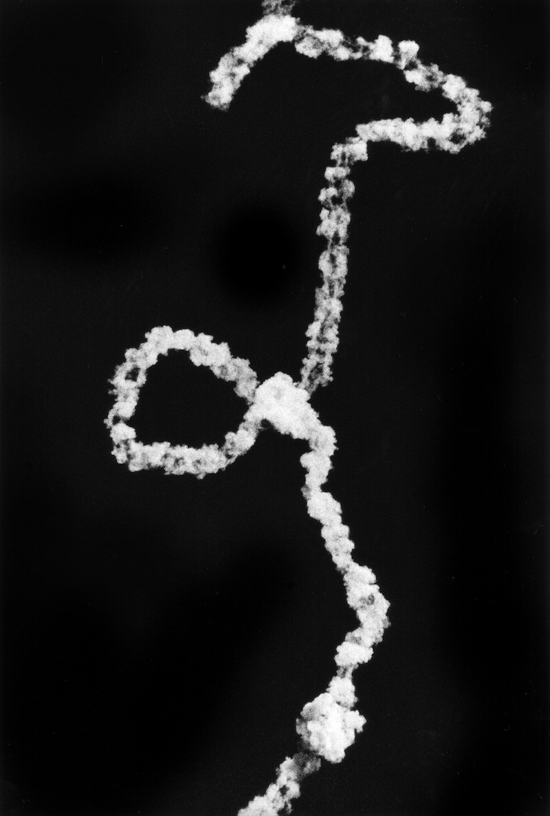 Copy of « White Sands Missile Range, New Mexico » by Renato D'Agostin