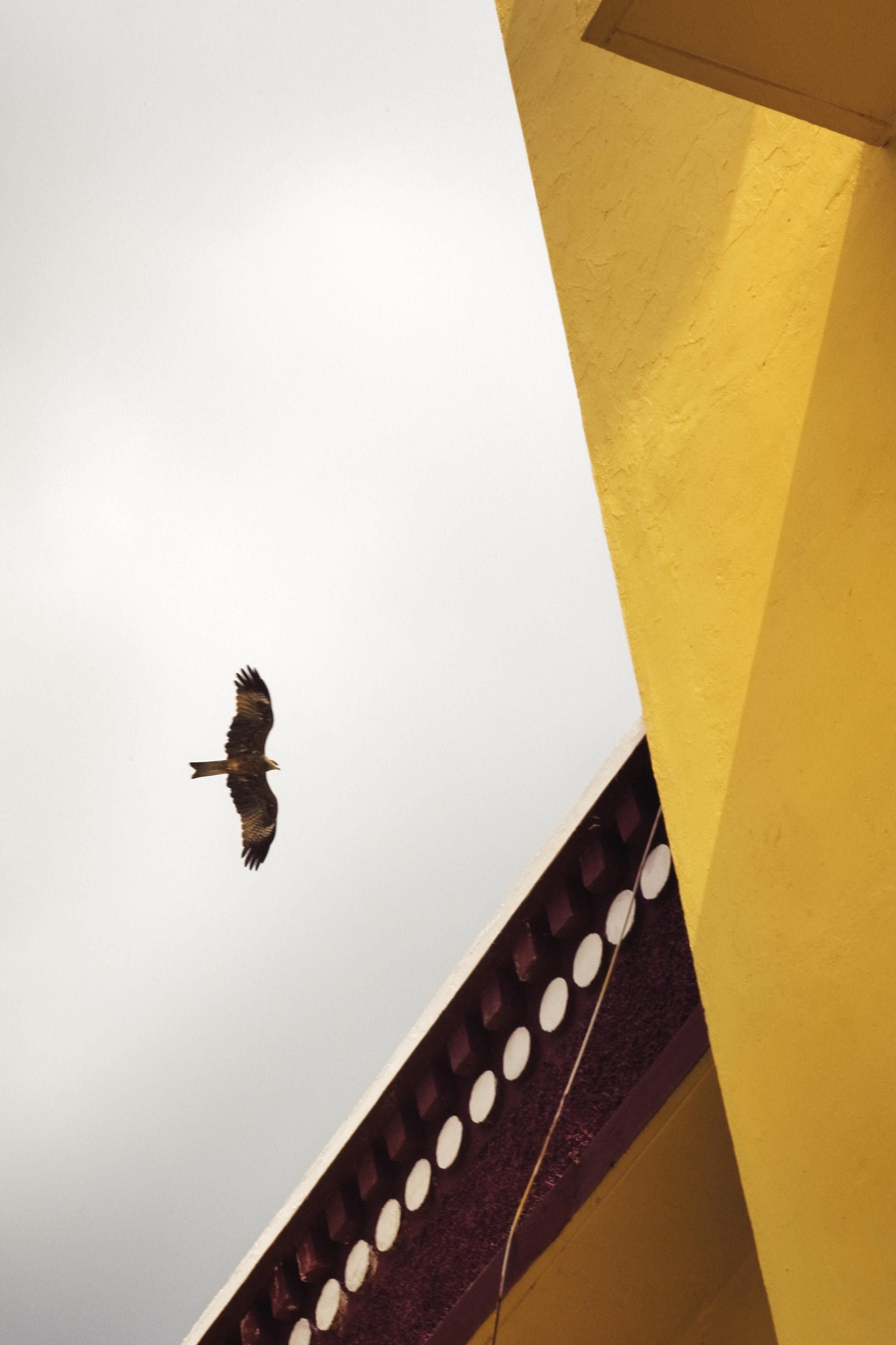 Tobi-Wilkinson_Gyuto-Within The Mind_Courtesy-Galerie-Thierry-Bigaignon.jpeg