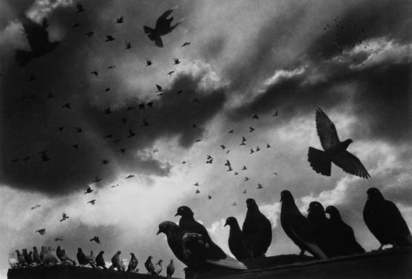 Harold Feinstein - Pigeons, 1956