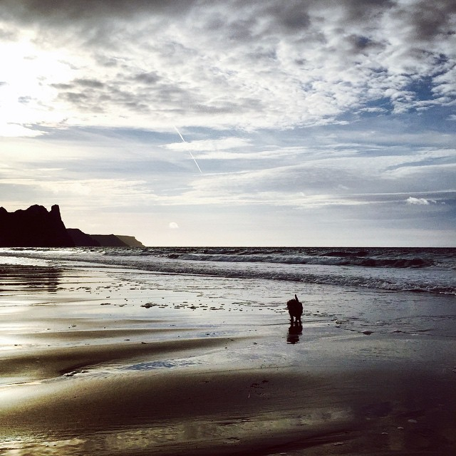 0f69921b538f99f6-beach-nicholstan-farm-blog-review-wales-welsh-three-cliffs-oxwich-bay-dog.jpg