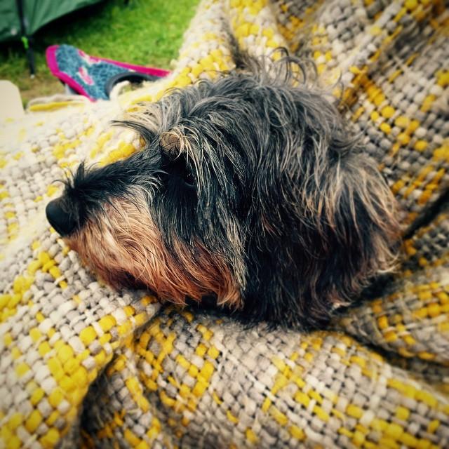e95d038019da0d62-nicholstan-farm-wales-welsh-camping-lifestyle-blog.jpg