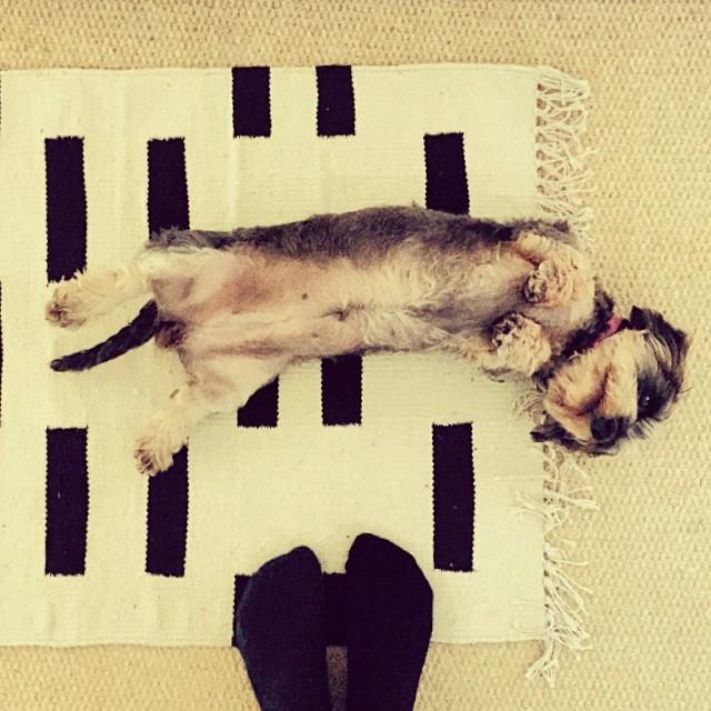 ffdc89e14c44f77d-urban-outfitters-rug-deco-abstract-dachshund.jpg