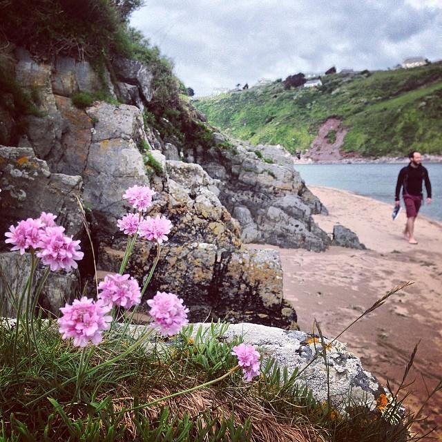 47a6437d8aa8306a-banthum-beach-flowers-dog-walk.jpg