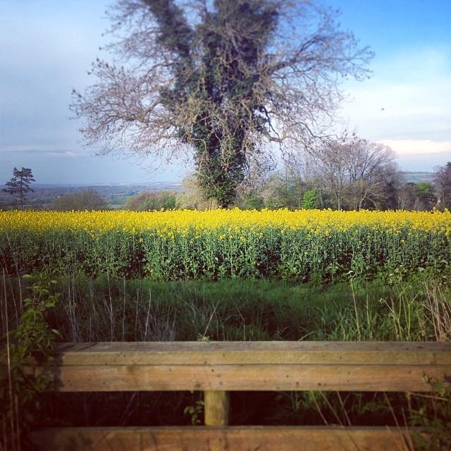 aea2fcca864c4cc9-cotswolds-yellow-sunshine-trees.jpg