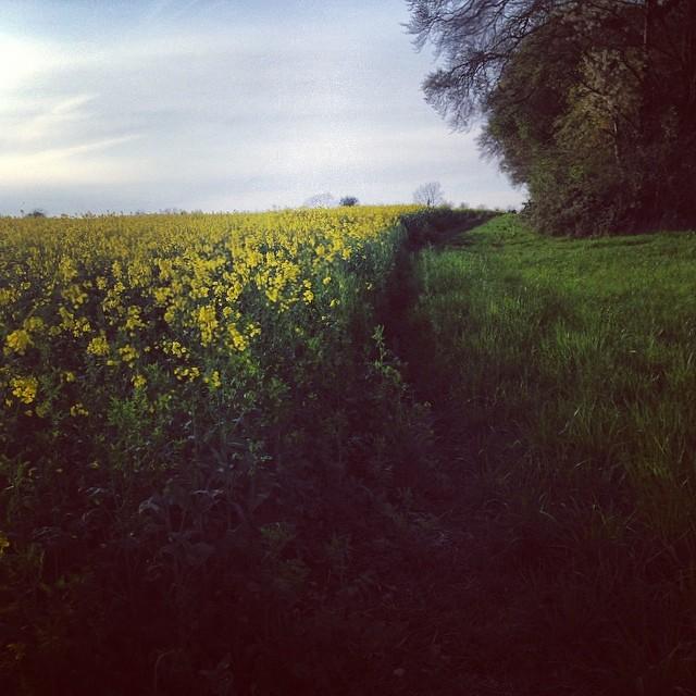 b19f95ddd609bf20-cotswolds-field-stow-yellow.jpg