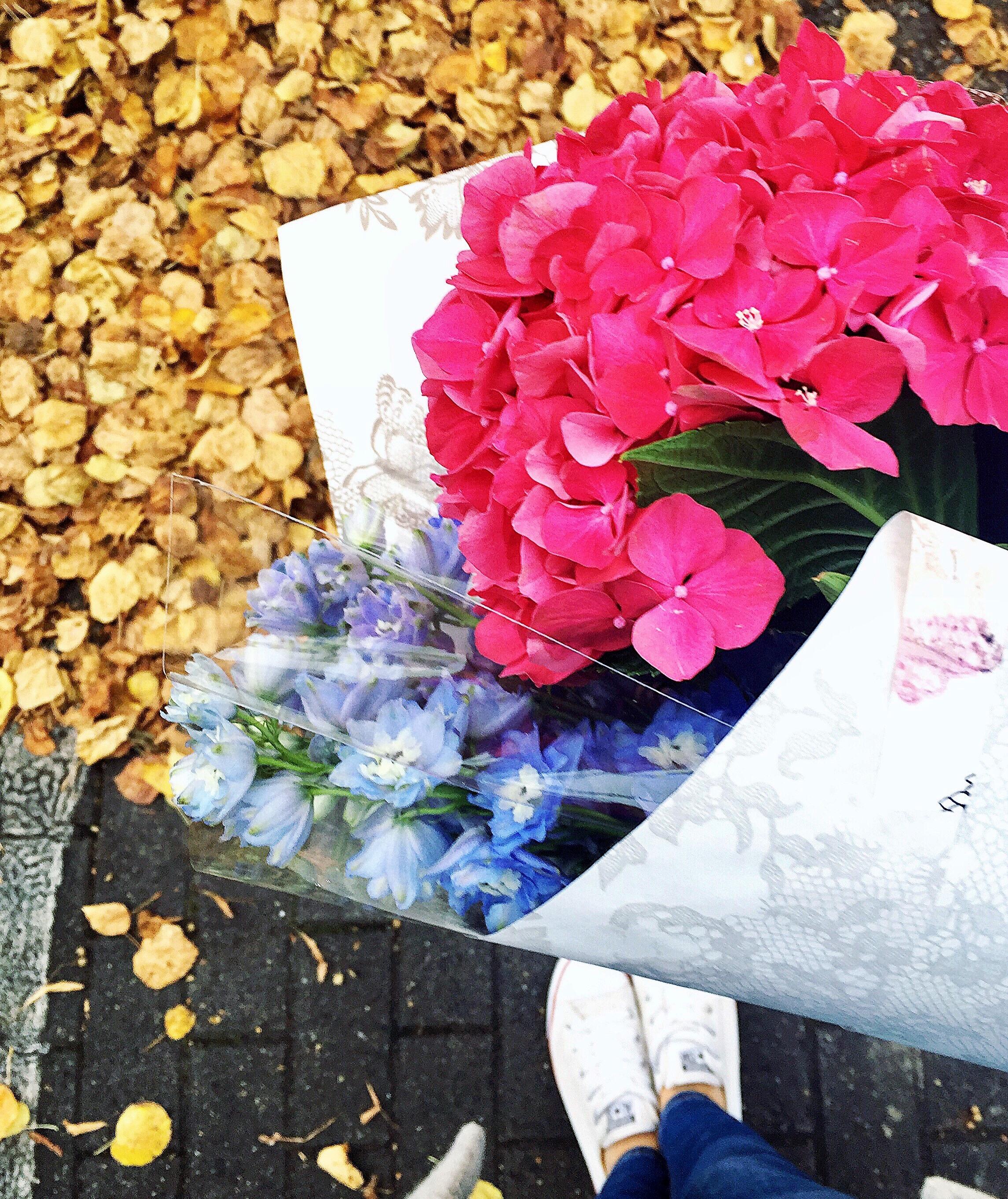 the-flower-man-local-flora-delphinium-hm-home-blog-autumn.JPG