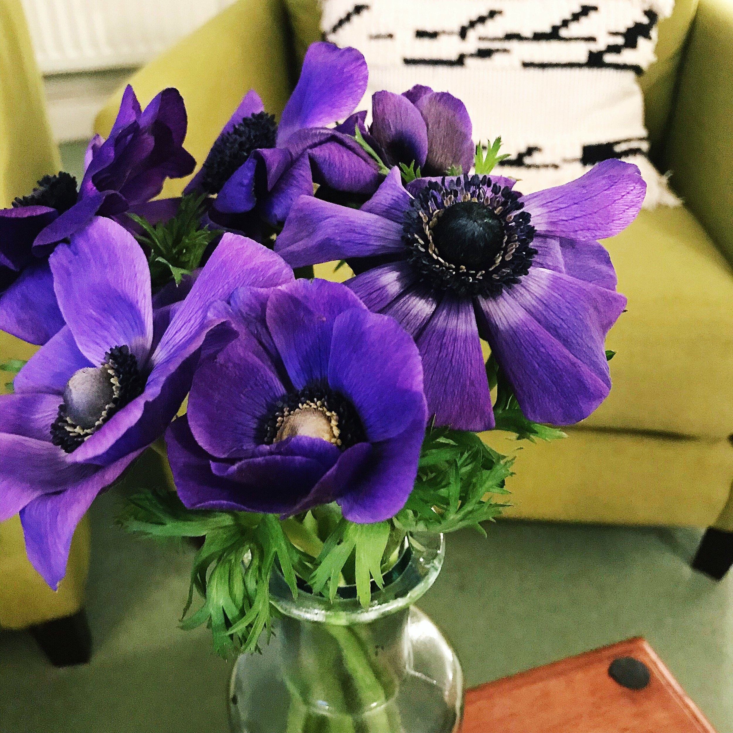 anemone-flowers-flora-florist-cirencester.JPG
