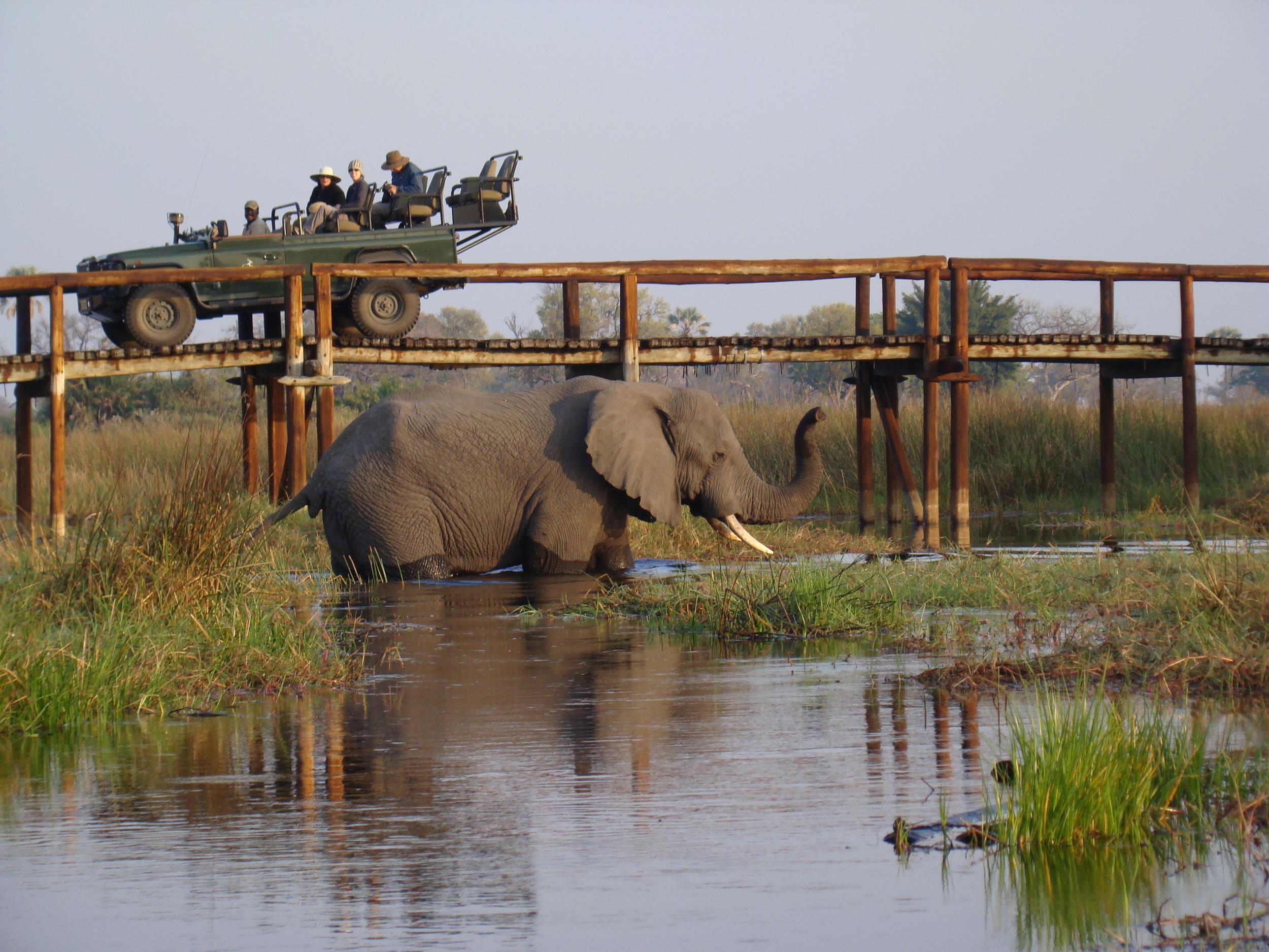 A-Elephants @Jao.JPG